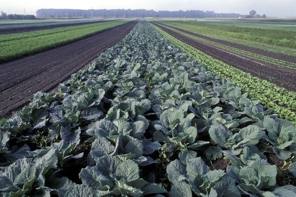 Selbstversorgung_Self-sufficiency_Landwirtschaft