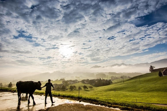 Cow and farmer stroll with sun-light breaking through a cloud sprinkled sky