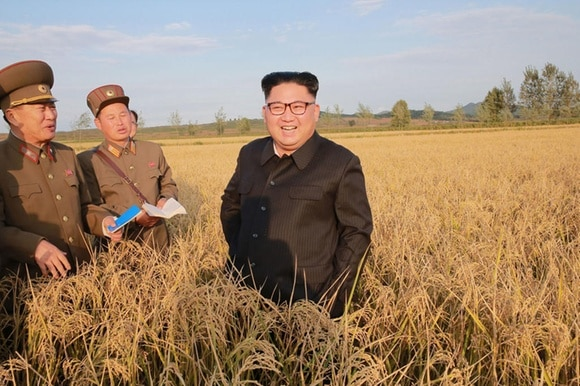 Kim jong un in un campo di grano assieme a due militari in uniforme