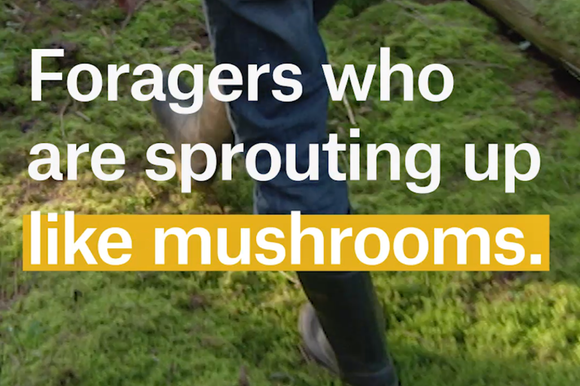 A cover image for a Nouvo video about the dangers of mushroom picking.