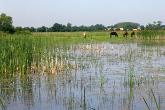 A pond with horses grazing in the background