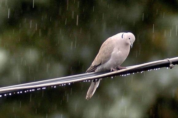 就连孩子们都认识的鸟类今天都受到物种灭绝的威胁