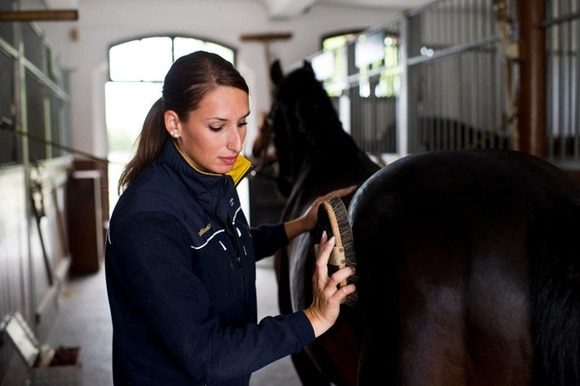 apprentice horse expert EFZ (Federal Vocational Education and Training Diploma)