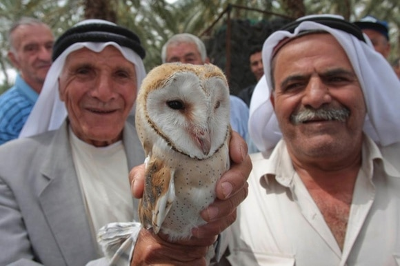 Two farmers with barn owls in Palestine