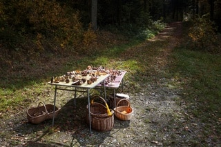 Table in forest covered with mushrooms