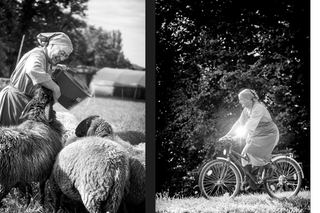 Nun feeding sheep and cycling