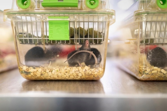 mice in glass boxes