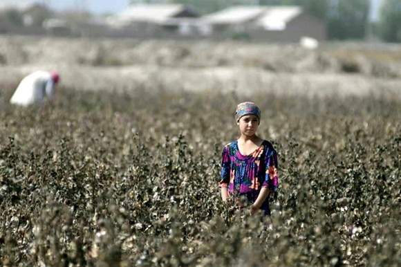 girl in a cotton field in Uzbekistan