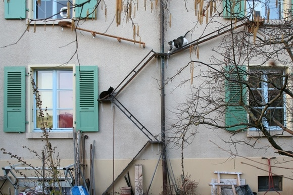 Cats climbing the cat ladders erected on the façade of a house in Bern