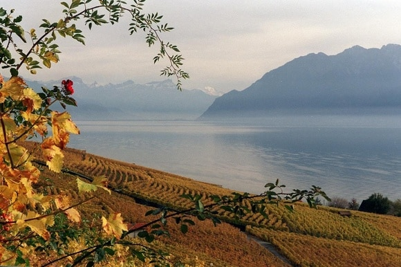 View of Lake Geneva with Lavaux vineyards