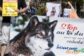 Demonstration against wolf hunting