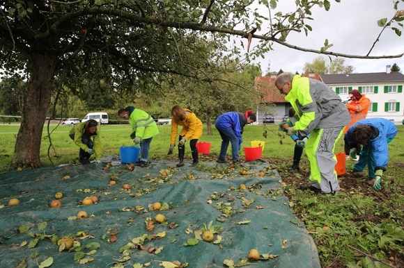 people picking apples