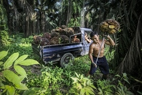 Palm oil worker in forest