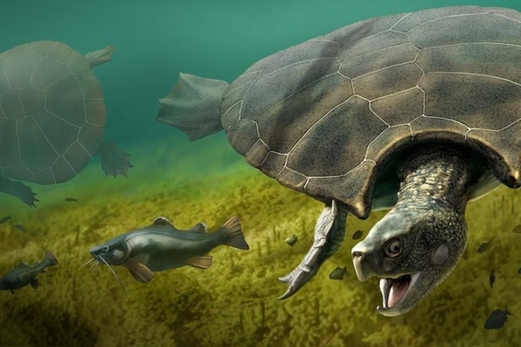 Visual reconstruction of the Stupendemys geographicus