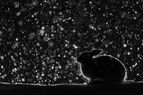 Snow scene with a rabbit back lit in the dark.