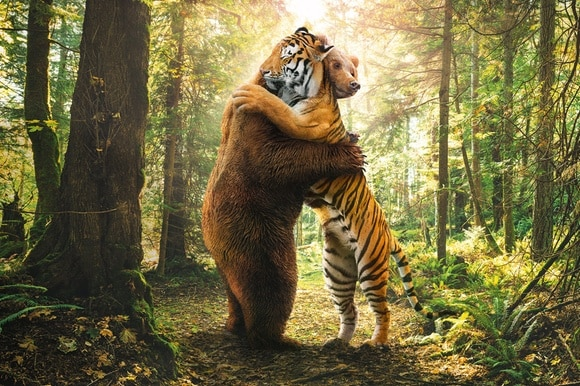 bear and tiger fighting
