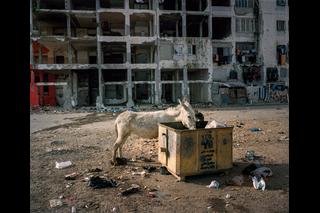 Esel frisst aus Kiste vor Wohnhaus