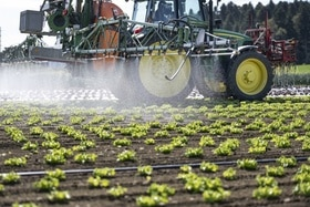 Tractor applying pesticide to a field of lettuce