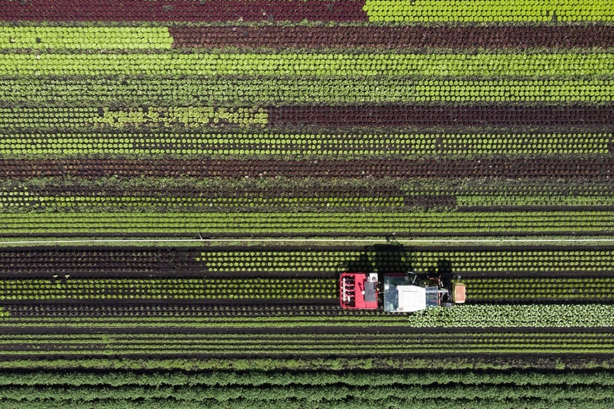 Aerial view of a lettuce field and a tractor.