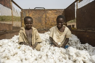 Work in the cotton fields of Cote D Ivoire, (Ivory Coast).
