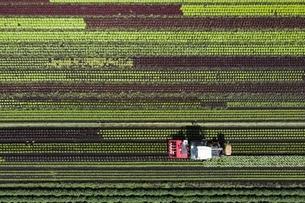Umfrage: Vorsprung der Agrarinitiativen könnte nicht reichen