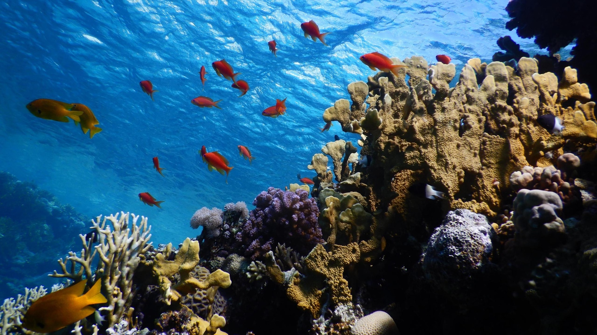 Swiss scientific diplomacy sets sail to save corals