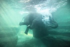 Elefanten, die baden