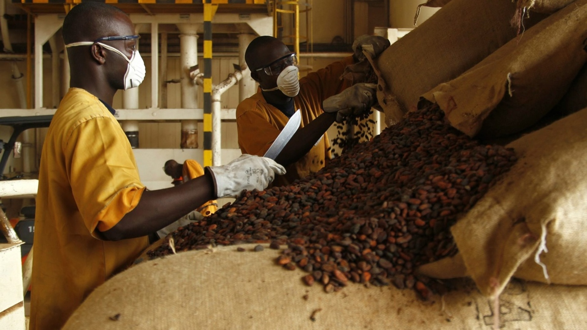 Can China help African cocoa producers outmanoeuvre Big Chocolate? - SWI swissinfo.ch